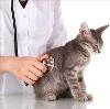 Ветеринарные клиники в Иланском